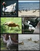 Photos: Water Fowl