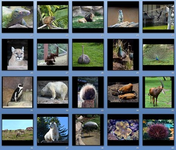 Photos - Zoo Animals Volume 1