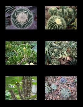Desert Plants Photos (BUNDLE)