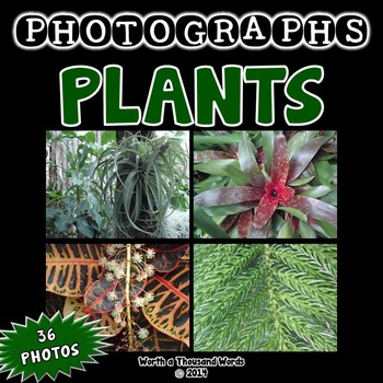 Photos: Plants