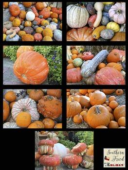 Pumpkins Photos