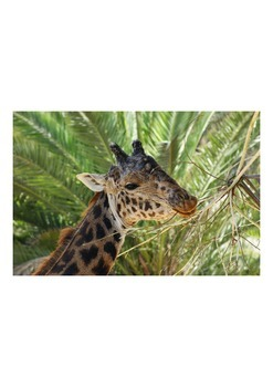 "Photos for ""Flashcards""- Animals"