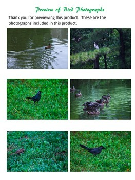 Photos of 6 Birds in Nature