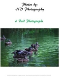 Photos of 6 Birds in Nature