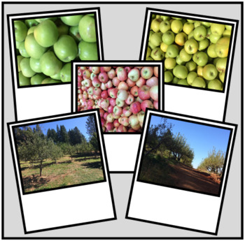 Photos of Apples and Orchards  ~ Good for Commercial or Personal Use