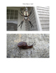Photos of Bugs and Insects