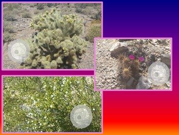 Photos of Desert Blooms - Realistic Pictures
