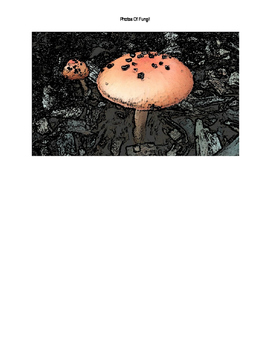 Photos of Fungi