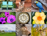 Photos of Various Every Day Items: animals, plants, buildi