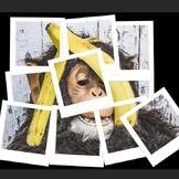 Photoshop CS6 Tutorial - Creating a Retro Polaroid Collage