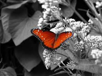 Photoshop Selective Colorization Black and White