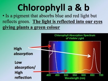 Photosynthesis - 2 DAY,56 slide Senior Biology PowerPoint Lesson & Student Notes