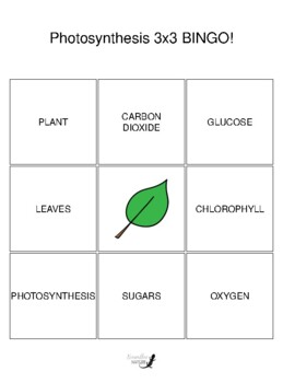 Photosynthesis 3 by 3 BINGO!