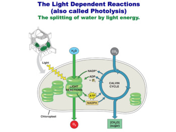 Photosynthesis (Editable)
