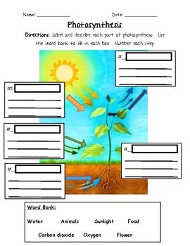 Photosynthesis Worksheet 3rd Grade: Photosynthesis   3rd Grade by Jennifer Caine   Teachers Pay Teachers,