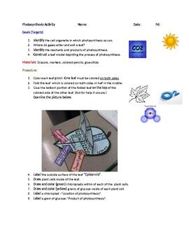 Photosynthesis Activity
