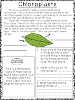 Photosynthesis Worksheets and Activities