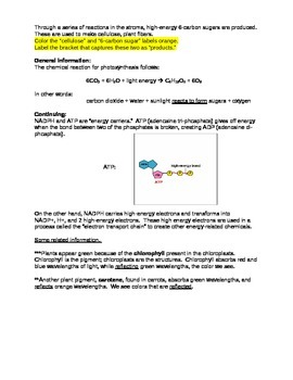 Photosynthesis Activity/Graphic Organizer