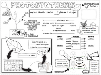 Photosynthesis Advanced Squiggle Sheets  NGSS HS LS1-5