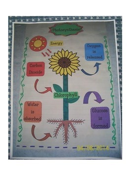 Photosynthesis Anchor Chart