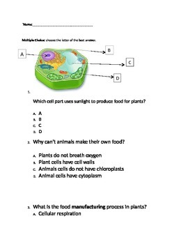 Photosynthesis Assessment