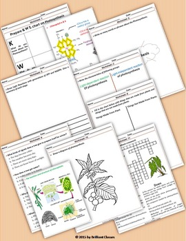Photosynthesis - Unit with Worksheets