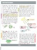 Photosynthesis Bundle - Notes, Activities, Quizzes, Diagrams, Quickwrites