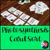 Photosynthesis Card Sort
