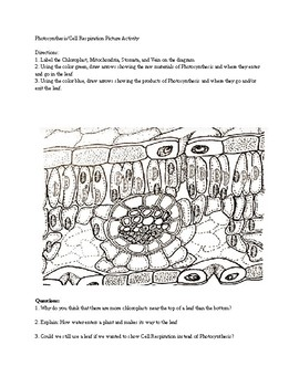 Photosynthesis Cell Organelle Worksheet