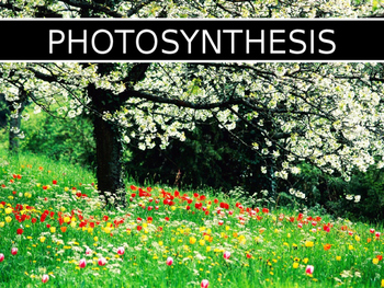 Photosynthesis - Cell Respiration Overview PPT