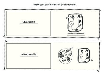 Photosynthesis, Cell Structure,Science, crossword puzzle, diagram, flash cards