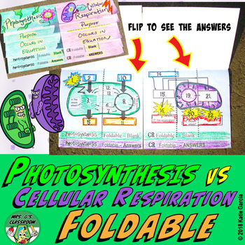 Photosynthesis Cellular Respiration