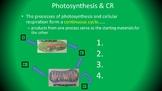 Photosynthesis & Cellular Respiration