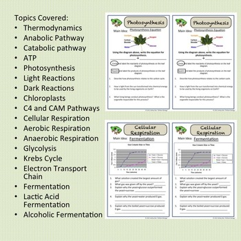 Photosynthesis & Cellular Respiration Bell Ringers, Exit Slips {NO PREP}