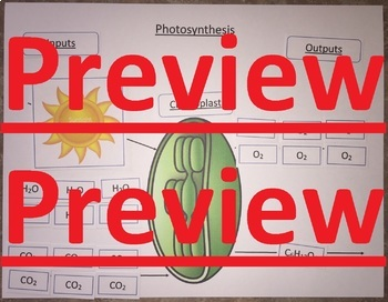 Photosynthesis & Cellular Respiration Card Sort NGSS MS-LS1-6 & MS-LS1-7