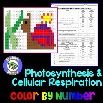 Energetics: Photosynthesis & Cellular Respiration Color By Number