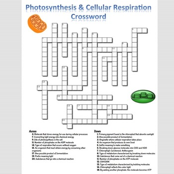 Photosynthesis & Cellular Respiration Crossword Puzzle