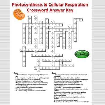 Photosynthesis Cellular Respiration Crossword Puzzle