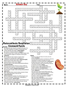 Photosynthesis crossword answers