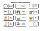 Photosynthesis & Cellular Respiration Dominoes