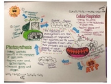 Photosynthesis & Cellular Respiration Doodle