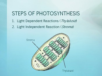 Photosynthesis & Cellular Respiration Power Point Presentation