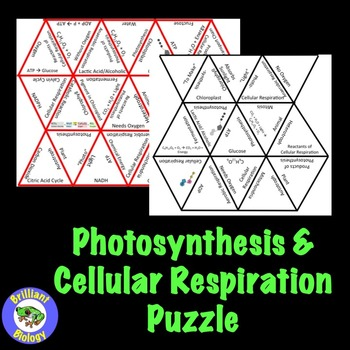 Photosynthesis & Cellular Respiration Puzzle Review