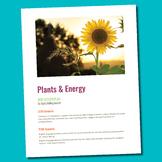 Photosynthesis Cellular Respiration SIOP Lesson Plan ESL S