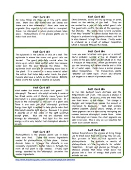 Photosynthesis & Cellular Respiration Scavenger Hunt & Resources
