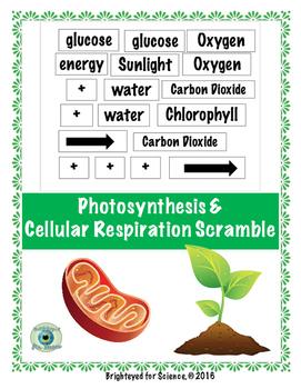 Photosynthesis & Cellular Respiration Scramble
