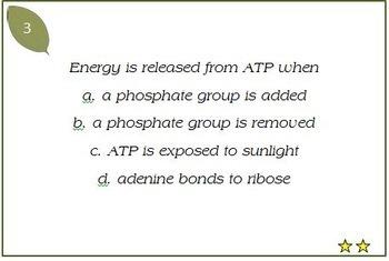 Photosynthesis & Cellular Respiration Task Cards