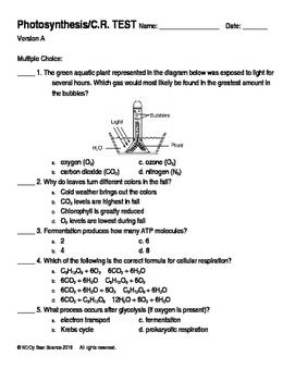 Photosynthesis/Cellular Respiration Test