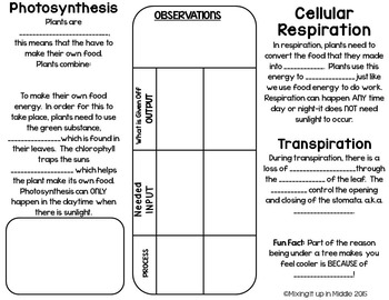 Photosynthesis, Cellular Respiration & Transpiration Brochure for INB