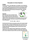 Photosynthesis & Cellular Respiration Worksheet